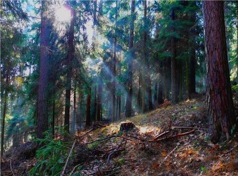 forest_by_Yassmine